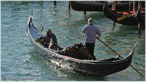 Videos Gondolas and Regattas in Venice