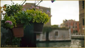 Fleurs d'automne sur le canal de la Misericordia, dans le Sestier du Cannaregio à Venise