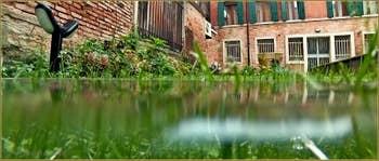 Le début de l'acqua Alta dans notre jardin à Venise. Une heure plus tard, il y en avait 10 cm de plus !