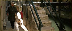Toutous sur la Fondamenta Rimpeto Mocenigo, le long du rio San Stae Mocenigo, dans le Sestier de Santa Croce à Venise.