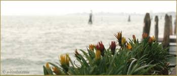Réminiscence de l'été, sur les Fondamente Nove, dans le Sestier du Cannaregio à Venise.