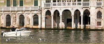 Mouettes en mode flotteur, devant le palais de la Ca' d'Oro, pas du tout gênées par les bateaux qui passent, sur le Grand Canal à Venise.