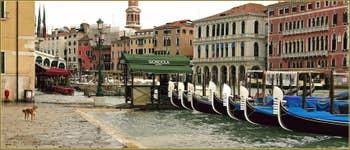 Petite Acqua Alta sur la Riva del Vin, Toutou attend sagement au sec ! Dans le Sestier de San Polo à Venise.