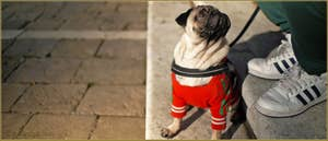 Le chien Raoul, sur la Fondamenta de la Misericordia, dans le Sestier du Cannaregio à Venise.