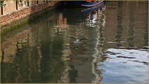 Mouette sur le rio del Malcanton à Venise.