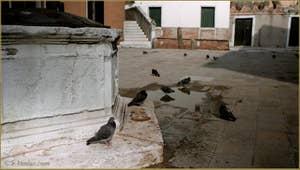 Le Campo Santa Ternita et ses pigeons, dans le Sestier du Castello à Venise.