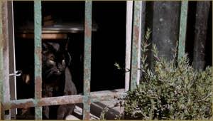Le minou noir du doreur de la Fondamenta Sant' Andrea, dans le Sestier du Cannaregio à Venise.
