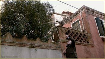 C'est le printemps, on taille les arbres, Piscina Venier, dans le Sestier du Dorsoduro à Venise.