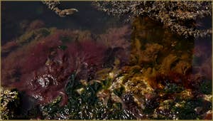 Les algues du printemps, dans le rio dei Carmini, dans le Sestier du Dorsoduro à Venise.
