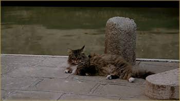 Chat de Venise, le vrai, chez lui : ne pas déranger !