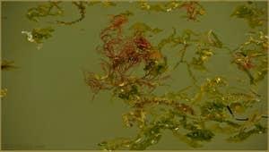 Les algues du printemps, sur le rio de Santa Eufemia, sur l'île de la Giudecca à Venise.