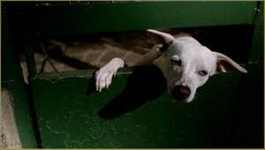 Une vie de chien, sur l'île de Murano à Venise.