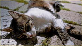 La belle vie des chats de Venise, ici Corte de la Carità, dans le Sestier du Cannaregio à Venise.