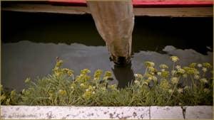 Fleurs sauvages, le long de la Fondamenta de l'Abazia, dans le Sestier du Cannaregio à Venise.