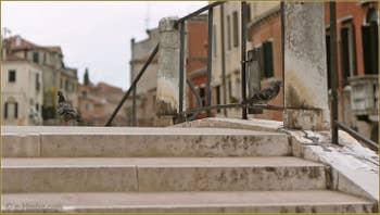 Pigeons sur le pont Brazzo, dans le Sestier du Cannaregio à Venise.