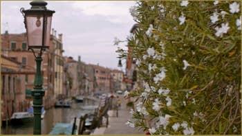 Lauriers blancs, le long du rio de la Sensa, dans le Sestier du Cannaregio à Venise.