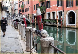 Les pigeons du rio dei Bareteri, le long de la Fondamenta Morosini, dans le Sestier de Saint-Marc à Venise.