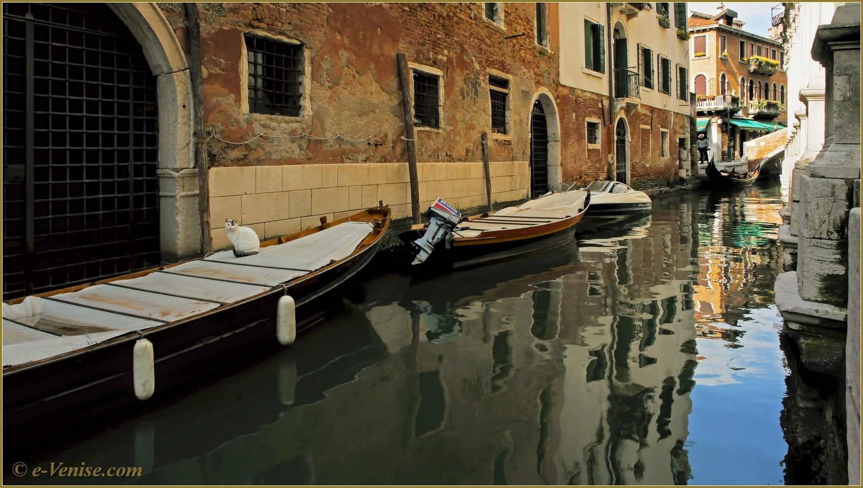 chat v nitien sur le rio dei miracoli venise. Black Bedroom Furniture Sets. Home Design Ideas