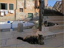 Le pont dei Muti et ses chats vénitiens