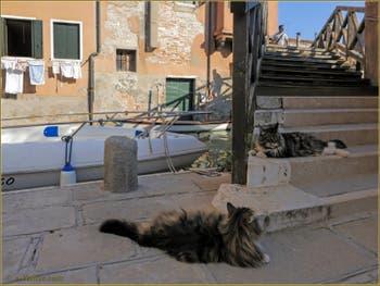 Le pont dei Muti et ses chats vénitiens, dans le Sestier du Cannaregio à Venise.