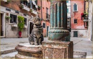 Le minou de la Corte Contarina, sur sa fontaine, dans le Sestier du Cannaregio à Venise.
