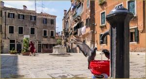 Le Campo Santa Ternita, son puits, sa fontaine et ses pigeons, dans le Sestier du Castello à Venise.