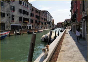 Le chat de la Fondamenta Foscarini, le long du rio dei Carmini, dans le Sestier du Dorsoduro à Venise