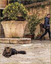 Pepe, chat vénitien, Campiello de le Erbe