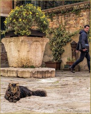 Pepe, chat vénitien devant son puits du XVe, Campiello de le Erbe, dans le Cannaregio à Venise.