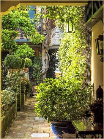 Dans l'intimité romantique et charmante du jardin d'un palais Vénitien à Saint-Marc.