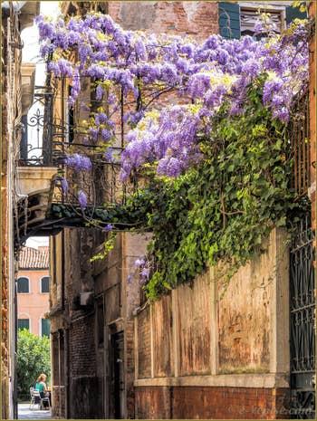 Printemps et Glycine Calle de la Pietà, dans le Sestier du Castello à Venise.
