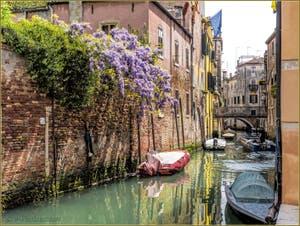 Glycine sur le Rio di San Martino o dell'Arco dans le Castello à Venise.