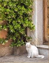 Le Chat de la Calle de l'Anzolo
