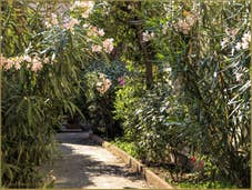 Laurier-rose et jardins secrets