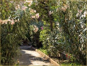Laurier-rose et jardins secrets de Venise.