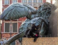 Chat Vénitien et Lion Campo Manin à Venise