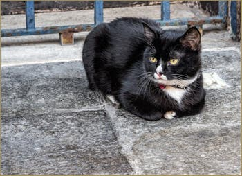 Jeune chat Vénitien Fondamenta dei Ormesini, dans le Cannaregio à Venise.