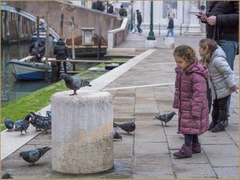 Pigeons et Minettes Campo San Giovanni e Paolo, dans le Castello à Venise.