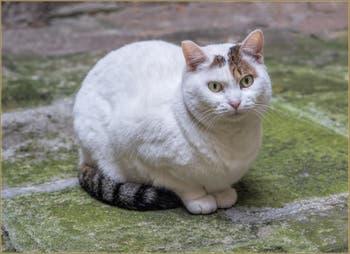 La petite chatte blanche Vénitienne de la Corte dei Miracoli, dans le Cannaregio à Venise.