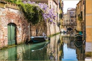 Glycine sur le Rio de San Martino o dell'Arco, dans le Castello à Venise.