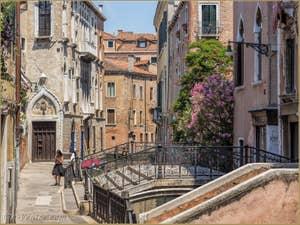 Lauriers roses Fondamenta de le Erbe, dans le Cannaregio à Venise.