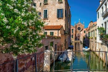 Lauriers rose sur le Rio Brazzo, au fond l'église de la Madona de l'Orto, dans le Sestier du Cannaregio à Venise.