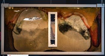 Anicka Yi, Biologizing the Machine, Terra Incognita, à la Biennale d'Art de Venise 2019