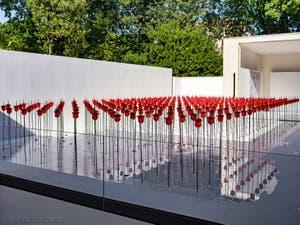 Renate Bertlmann, Champ de Roses, Discordo Ergo Sum, au pavillon de l'Autriche à la Biennale d'Art de Venise