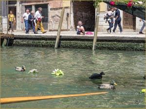 Vogalonga Venise : Les canards du Cannaregio