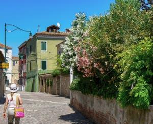 Les lauriers roses des jardins de Murano à Venise