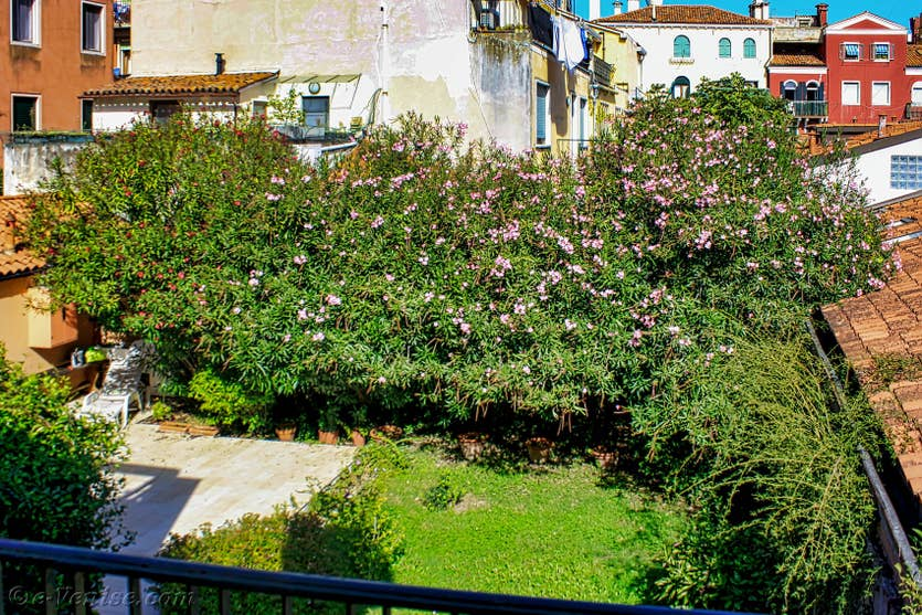Location Madona Cannaregio à Venise, la vue sur le jardin