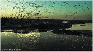Erään Hyönteisen Tuho (The Death of an Insect) de Hannes Vartiainen, Pekka Veikkolainen
