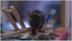 Mouse Palace de Harald Hund, Paul Horn