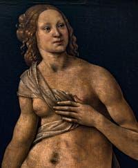 Lorenzo di Credi, Vénus, 1490, à la Galerie des Offices, les Uffizi à Florence en Italie